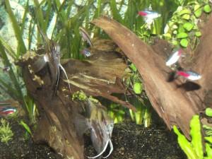 unsere Fische in Behrensen